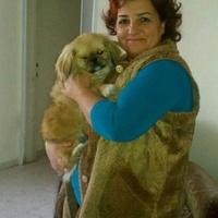 Rita Ayalon, 54 года, Овен, Арад