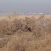 AaaRoma 24 Душанбе