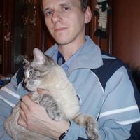 Александр, 34 года, Скорпион, Нижний Новгород