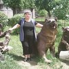 Nina, 61, г.Ереван