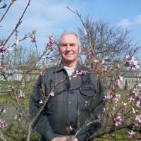 Мстислав Владимирович, 71 год, Овен, Краснодар