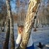 наташа, 41, г.Иркутск