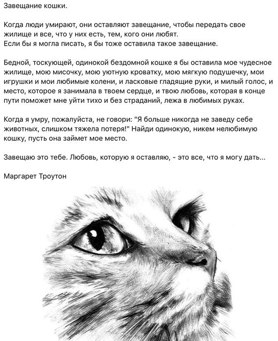 картинки о потере кошки воздействие