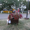 дарина, 18, г.Запорожье
