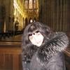 Elena, 41, г.Горловка