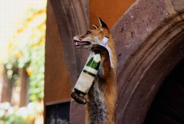 Картинка с пьяными лисами