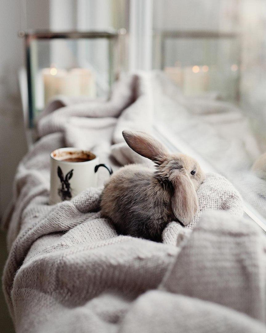 Очень красивые и милые картинки с добрым утром