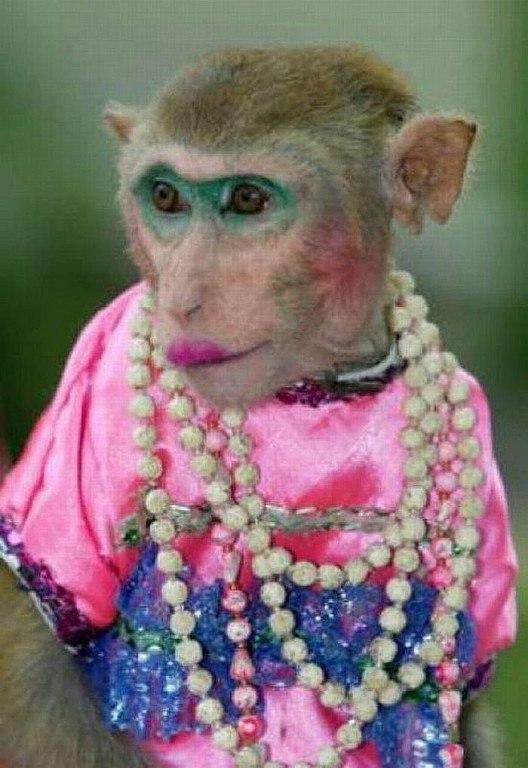 картинка с обезьяной накрасилась дороги, идущей